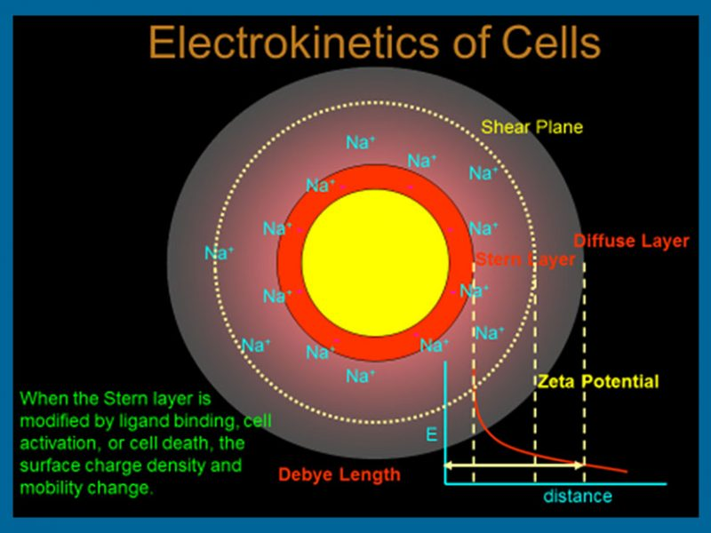 Cell surface analysis